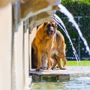 Dog standing in the fountain