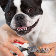 Dog getting its nails clipped