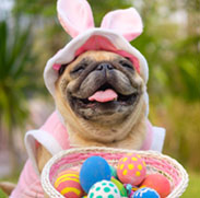 Dog in a pink bunny costume