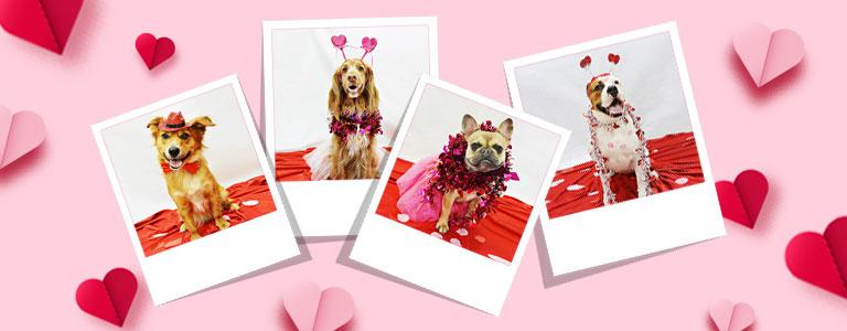Valentine's Photo Event