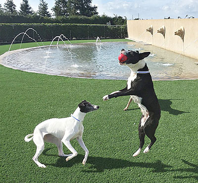 Puppies playing with a ball by the pool